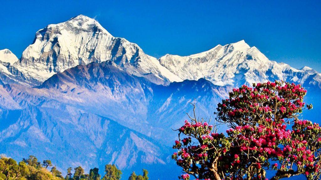 Ghorepani poon hill pic